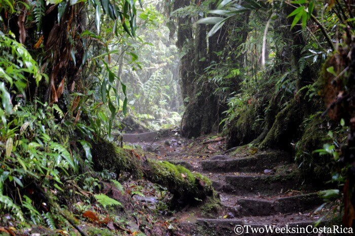 Trail-Conditions-at-the-Monteverde-Cloud-Forest-Reserve