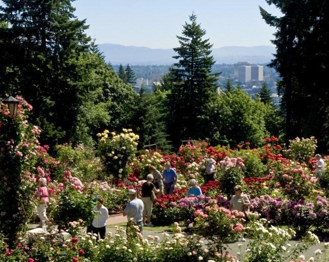 International Rose Gardens Portland