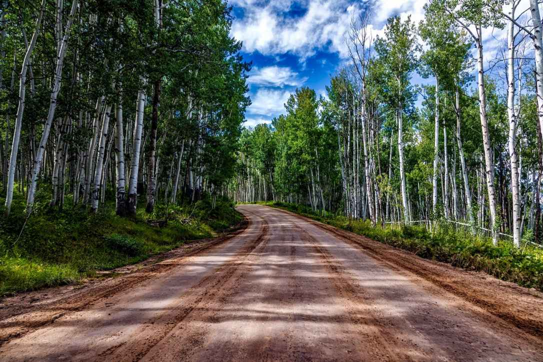 aspens country countryside dirt road